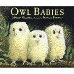 owl-babies